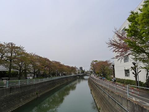 真間川(散策) 豊友ハウジング